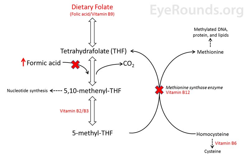 Biochemical interaction between Folate (vitamin B9), vitamin B12 (cobalamin), and formic acid. A dietary deficiency of folate or B12 (red X's) will lead to the accumulation of formic acid and cause toxicity.